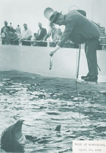 SGC Cowles feeds a dolphin at Marineland, Florida on April 17, 1946